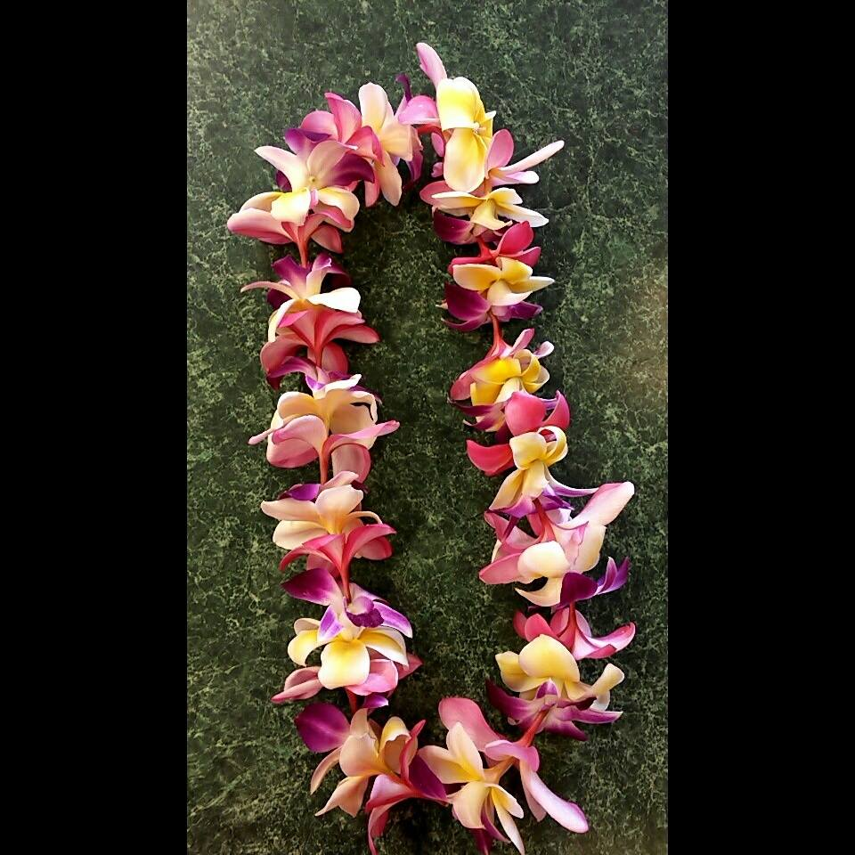 Multicolor plumeria and orchid